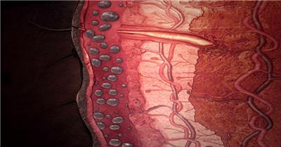 0676-细胞生长1 15-植物快速生长-1
