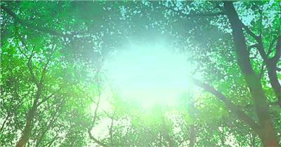 套唯美小清新树叶树林阳光空镜头 大自然春天夏天绿叶动态视频素材森林背景