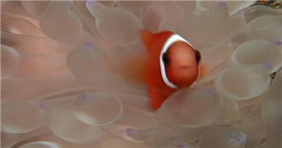 海底世界小鱼游动遮罩素材ГАНД大海 海边 海洋