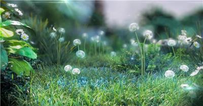 三维动画 高清视频素材 蒲公英 唯美画面 植物