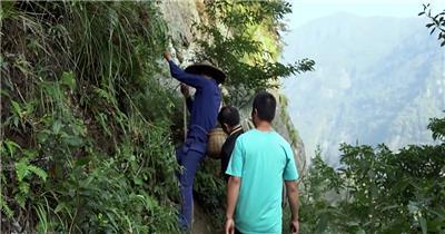 采草药悬崖羊群大山森林植物草药中药品视频素材宣传片素材专题片素材