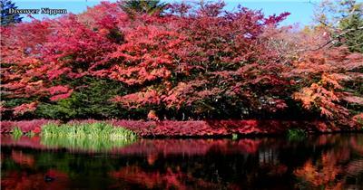 [4K] 深秋红叶 4K片源 超高清实拍视频素材 自然风景山水花草树木瀑布超清素材