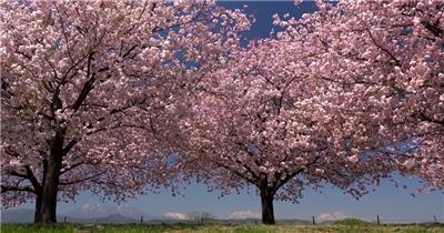 [4K] 盛开的花卉 4K片源 超高清实拍视频素材 自然风景山水花草树木瀑布超清素材