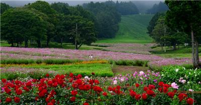 [4K] 草地上的小花 4K片源 超高清实拍视频素材 自然风景山水花草树木瀑布超清素材