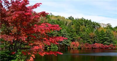 [4K] 原始森林景色 4K片源 超高清实拍视频素材 自然风景山水花草树木瀑布超清素材