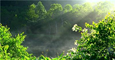[4K] 夏季森林 4K片源 超高清实拍视频素材 自然风景山水花草树木瀑布超清素材