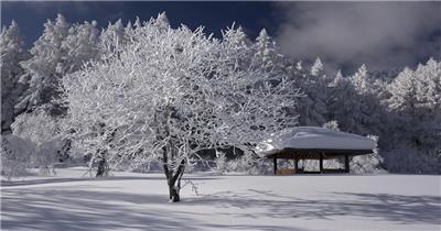 [4K] 冬季高原雪景 4K片源 超高清实拍视频素材 自然风景山水花草树木瀑布超清素材