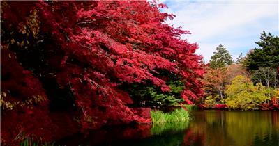 [4K] 红叶静湖1 4K片源 超高清实拍视频素材 自然风景山水花草树木瀑布超清素材