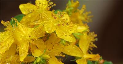[4K] 春天的花 4K片源 超高清实拍视频素材 自然风景山水花草树木瀑布超清素材