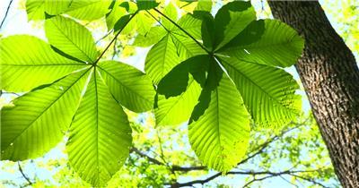 [4K] 仙境 4K片源 超高清实拍视频素材 自然风景山水花草树木瀑布超清素材