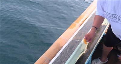 4K超清渔民捕鱼鱼类美食实拍视频