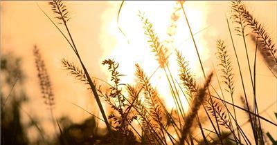 自然美景含日出湖边高山云层星空城市乡村梯田日出日落风景高清实拍视频素材