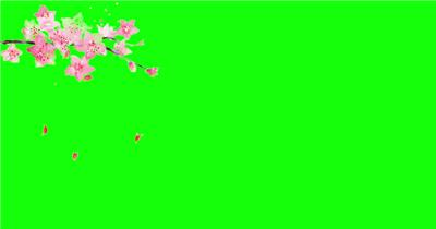 绿底抠图花瓣飘落 多个式样